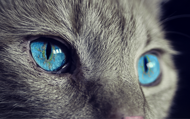 cat_nSdZA0